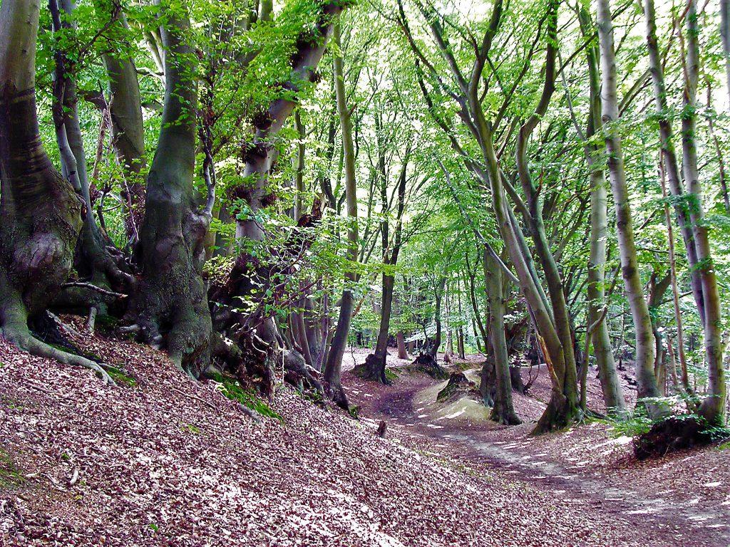 Rickelrather Wald Molzmühle