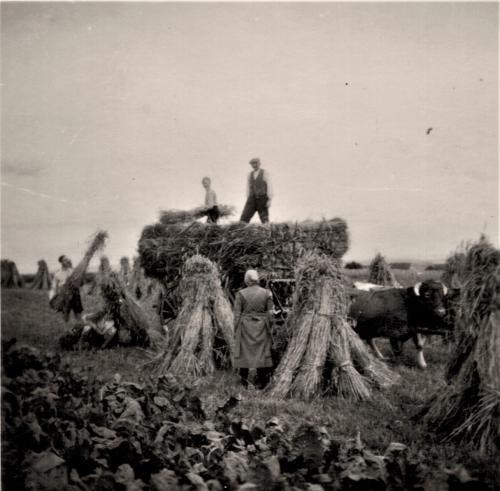 Historisches Rickelrath Feldarbeit